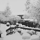 Winter In The Garden  by Sandra Foster