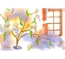 Missouri Dogwood in the Window Photographic Print