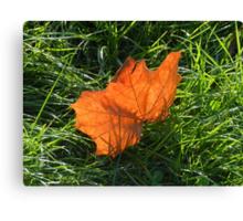 Backlit Autumn Leaf Canvas Print