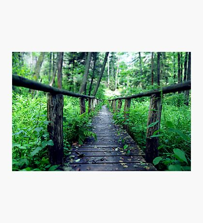 Wooden bridge in the forest Photographic Print