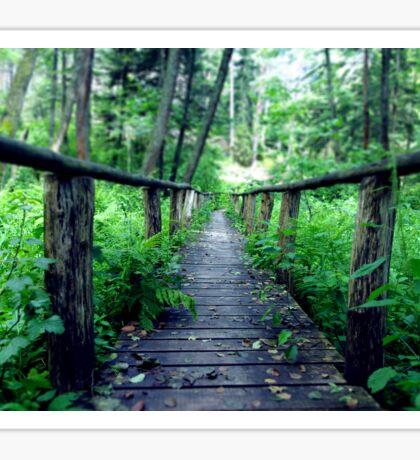 Wooden bridge in the forest Sticker