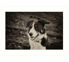 The world's friendliest sheep dog Art Print