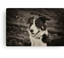 The world's friendliest sheep dog Canvas Print