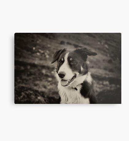 The world's friendliest sheep dog Metal Print