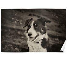 The world's friendliest sheep dog Poster