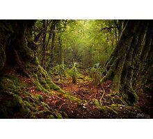 The Ballroom Forest Photographic Print