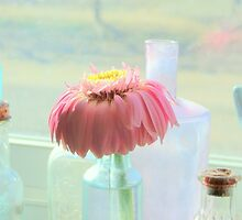 Little Droopy Gerbera by trueblvr