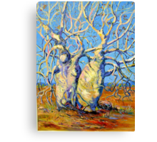 Kimberley Giants, Boab Trees Canvas Print