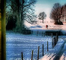 The Snow Fields by naturelover