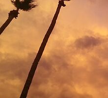 Palms During Monsoon by AshleyPaynter