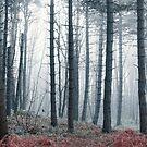 Hazy Forest by Svetlana Sewell