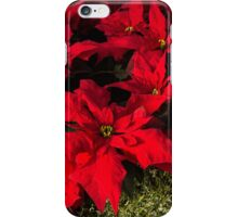 Happy Scarlet Poinsettias Christmas Star iPhone Case/Skin