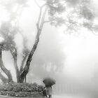 Foggy day by Laurent Hunziker