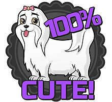 Small white dog - 100% cute, Maltese! Photographic Print