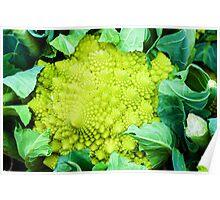 Romanesco broccoli cabbage or Green cauliflower Poster