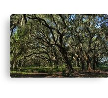 old homesite along the kissimmee river Canvas Print