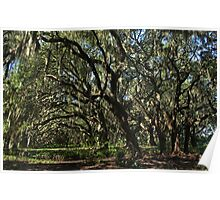 old homesite along the kissimmee river Poster
