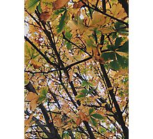 Leaves Turning Yellow Photographic Print