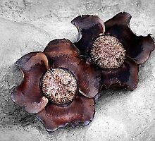 Coconut past by LouD