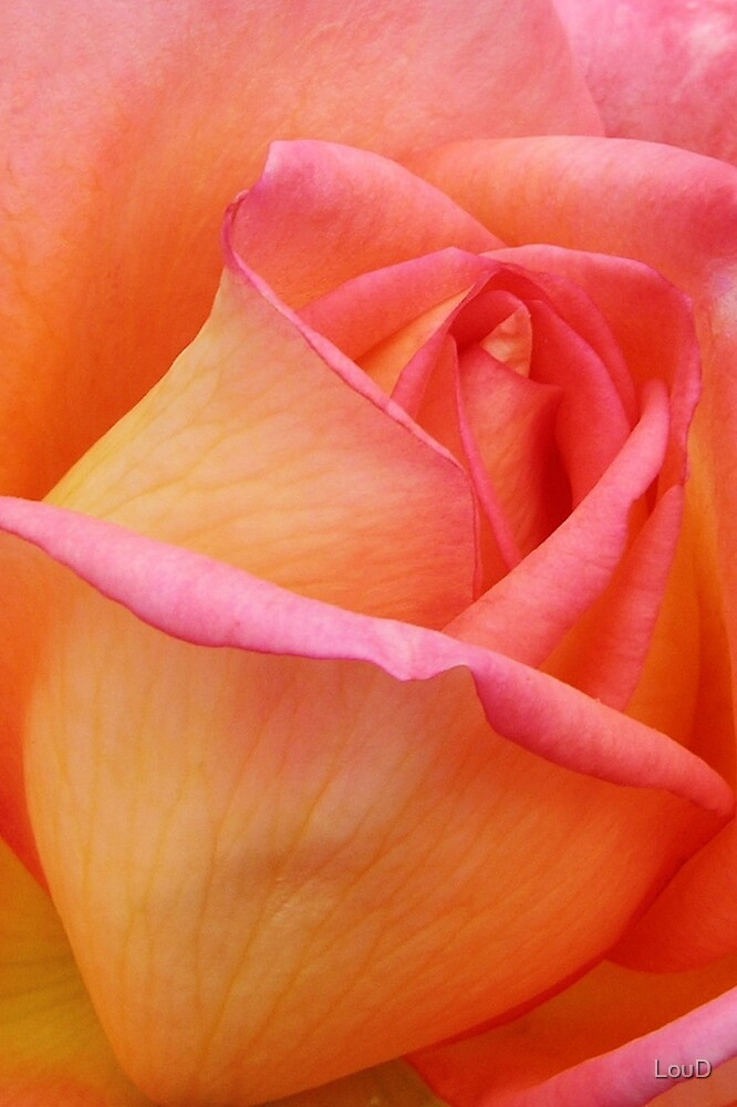 Absolute Beauty - from My Mother's Secret Garden by LouD