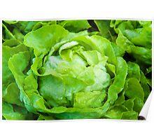 Closeup on fresh wet lettuce in the garden Poster
