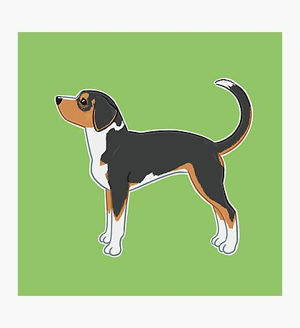 Hound Dog - Green Background / coonhound foxhound tricolor profile side stacked show akc drawing art illustration Photographic Print