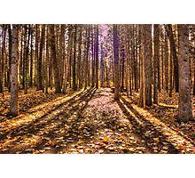 Light in the Forest Photographic Print