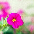 Pretty Petunia by Kasia-D