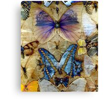 Antique Butterfly Enhanced Collection  Canvas Print