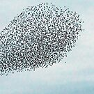 Murmuration Under Attack! by MikeSquires