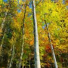 Painted color trees by bogfl