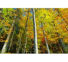 Painted color trees Photographic Print