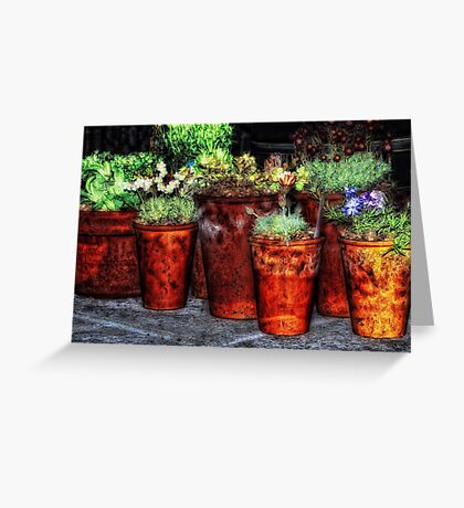 Alpines and Terracotta Pots Greeting Card