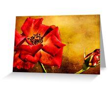 Scarlet Flower Greeting Card