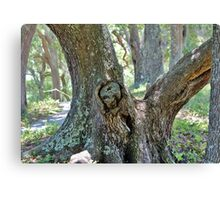 Spooky Face In A Tree Canvas Print