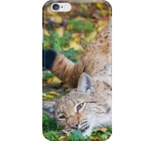Playful Lynx iPhone Case/Skin