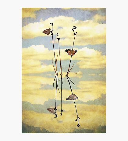 Butterflies, Reeds and Reflections Photographic Print