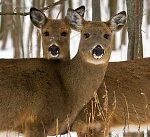 Deer in the wintry forest by Denise Trocio