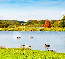 English landscape in autumn with colorful trees and wildlife by Stanciuc
