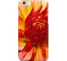 Flower - Dahlia - Natures breath taker iPhone Case/Skin