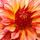 Flower - Dahlia - Natures breath taker by Mike  Savad