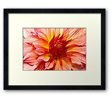 Flower - Dahlia - Natures breath taker Framed Print