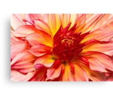 Flower - Dahlia - Natures breath taker Canvas Print