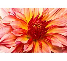 Flower - Dahlia - Natures breath taker Photographic Print