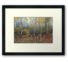 Fall Structures Framed Print
