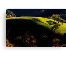 Late Afternoon Light Canvas Print