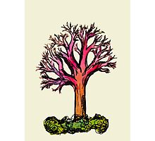 Colorful Tree Photographic Print