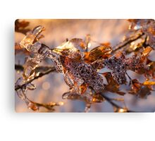 Mother Nature's Christmas Decorations – Oak Leaves Jewelry Canvas Print
