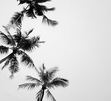Palm Trees by GRACE COSTA