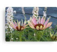 Echinacea Blossoms Canvas Print